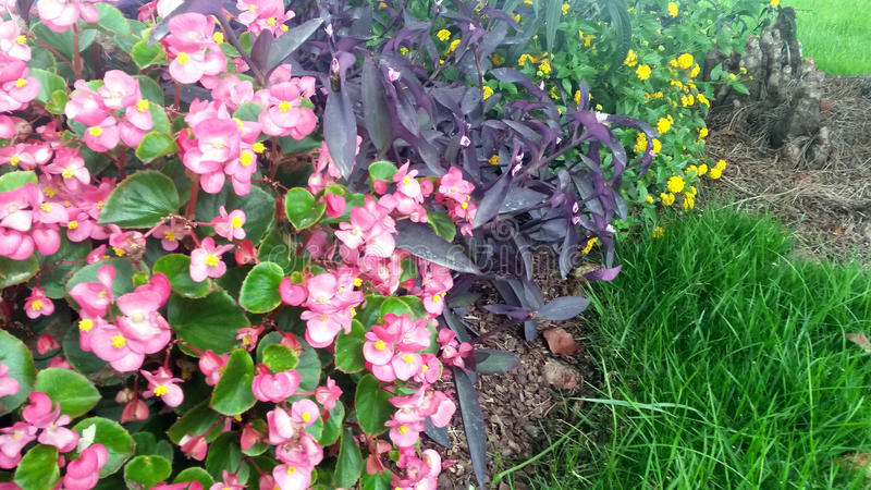 Blommor i rabatt royaltyfria foton
