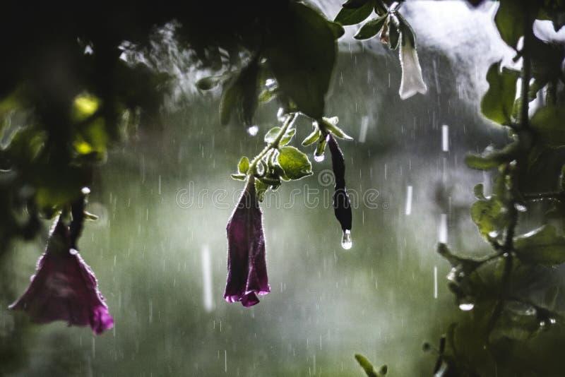 Blommor i regn royaltyfri fotografi