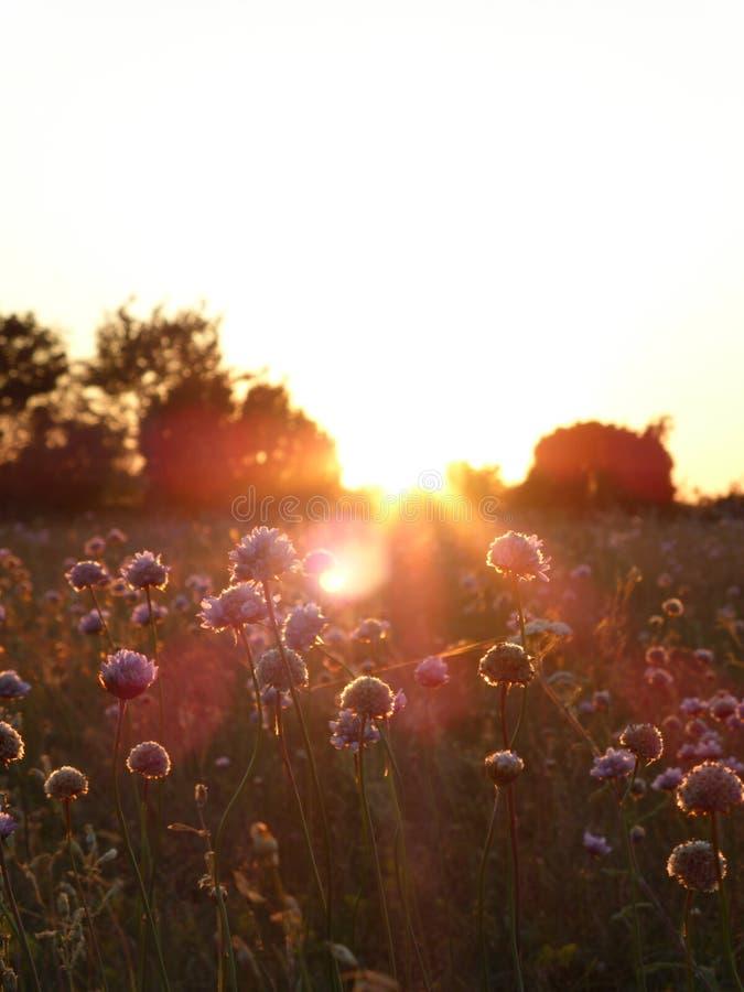 Blommor i solen royaltyfria foton