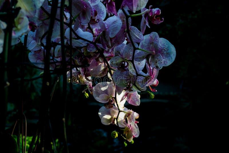 Blommor i solljuset arkivbilder