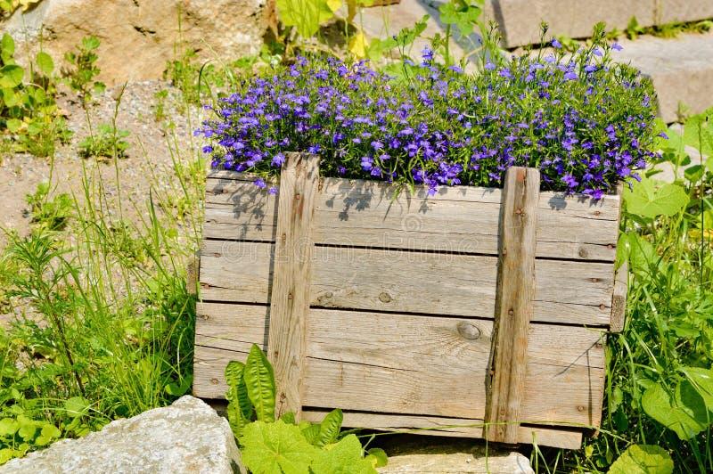 Blommor i spjällåda fotografering för bildbyråer