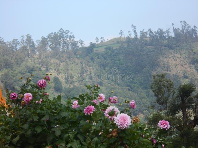 Blommor i Sri Lanka arkivbild