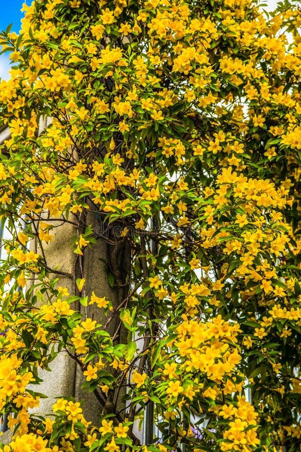 Blommor i i stadens centrum Chattanooga Tennessee royaltyfri fotografi