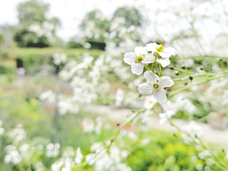 Blommor i Sunken Garden Kensington Palace royaltyfri fotografi