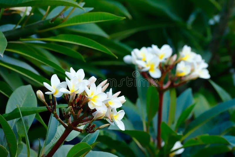 Blommor i trädgården av ett forntida värdigt hem i det historiska centret av Jianshui Yunnan Kina royaltyfri bild
