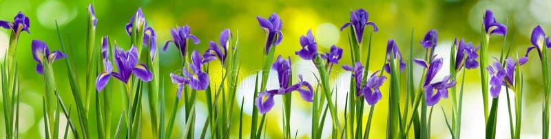 Blommor i trädgården på en grön bakgrund royaltyfri bild