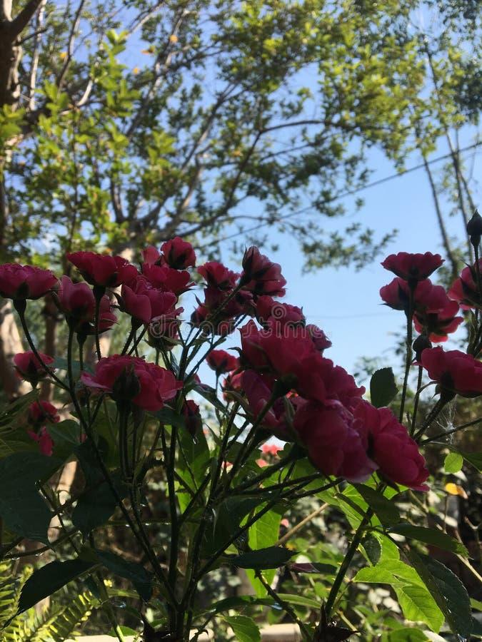 Blommor i tr?dg?rden royaltyfria foton