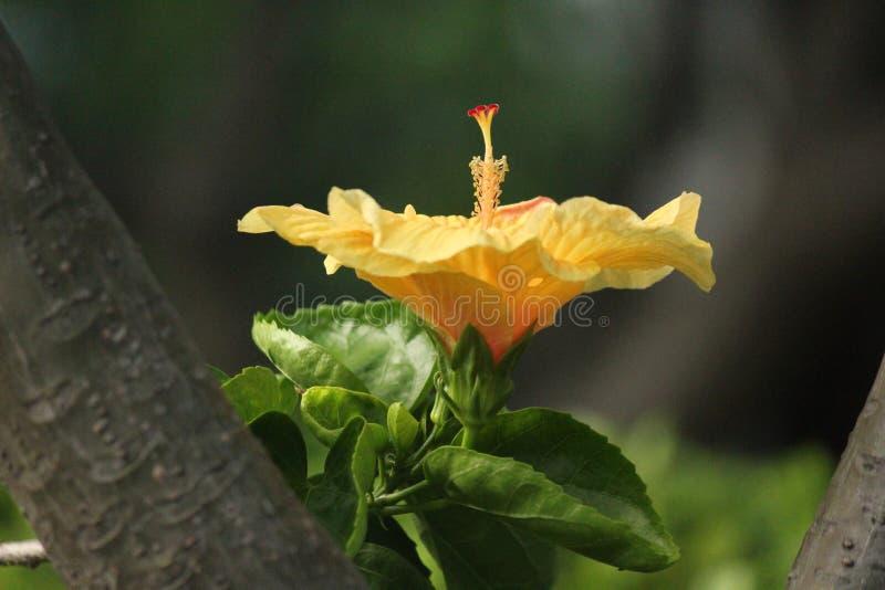Blommor i tropiskt land arkivbild