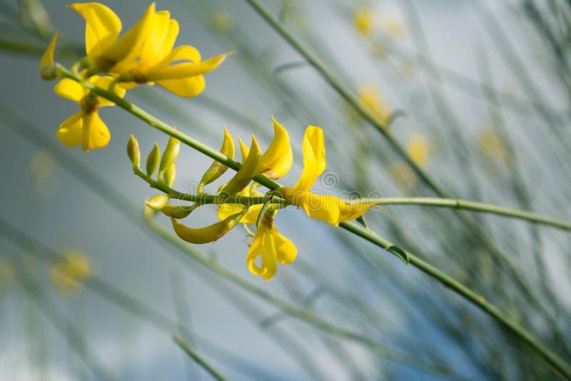 Blommor i vindkast av vind Spanien Jerez de la Frontera royaltyfri foto