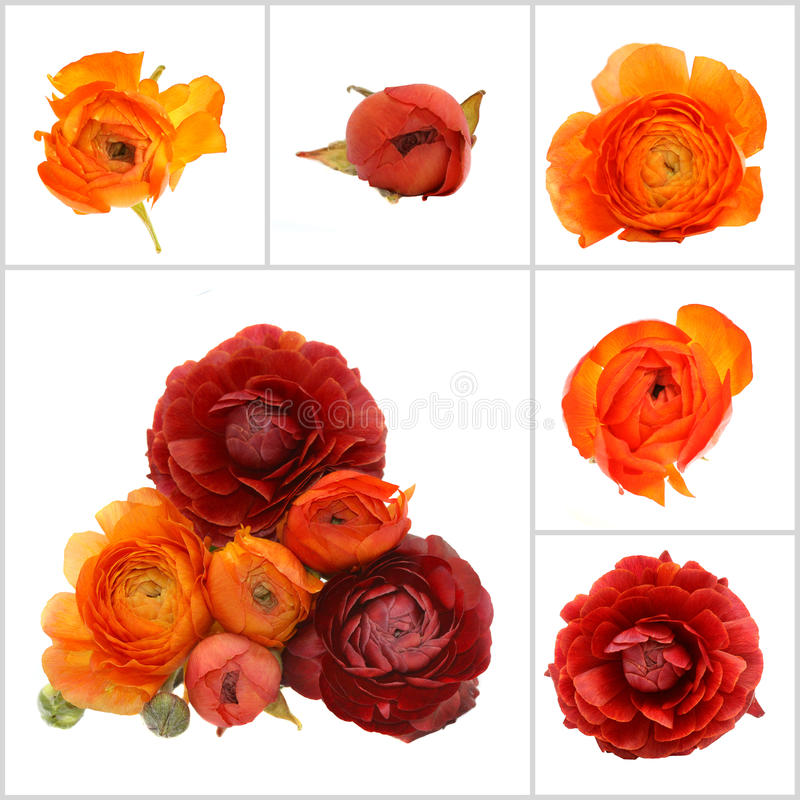 blommor isolerade orangen royaltyfria bilder