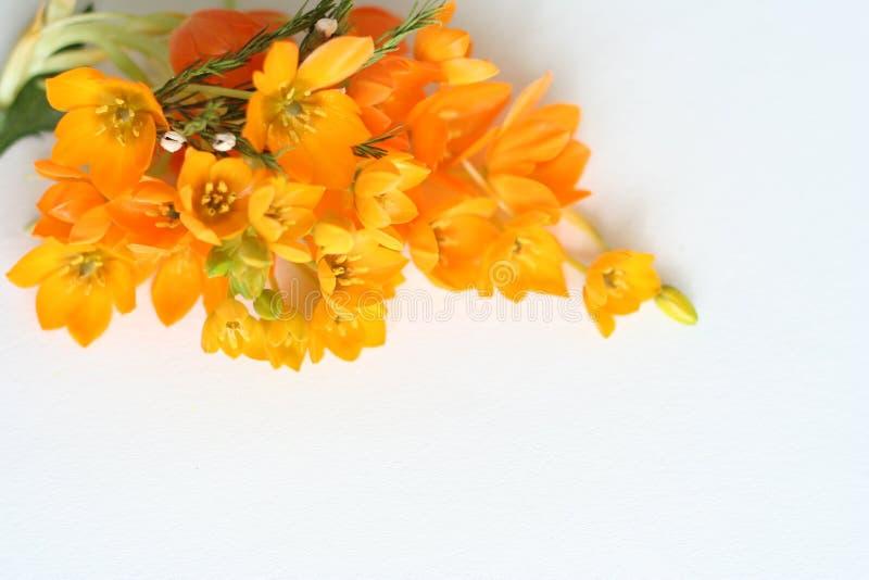blommor isolerade yellow royaltyfri foto