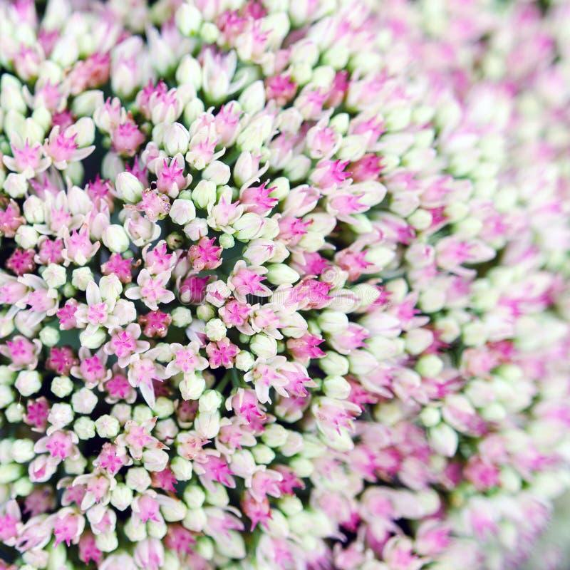blommor little royaltyfria foton