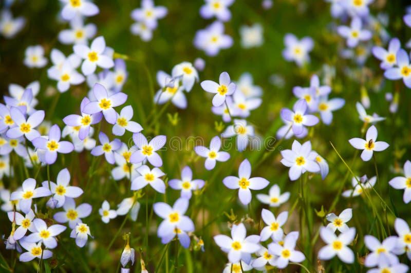 blommor little som är purpur royaltyfria foton