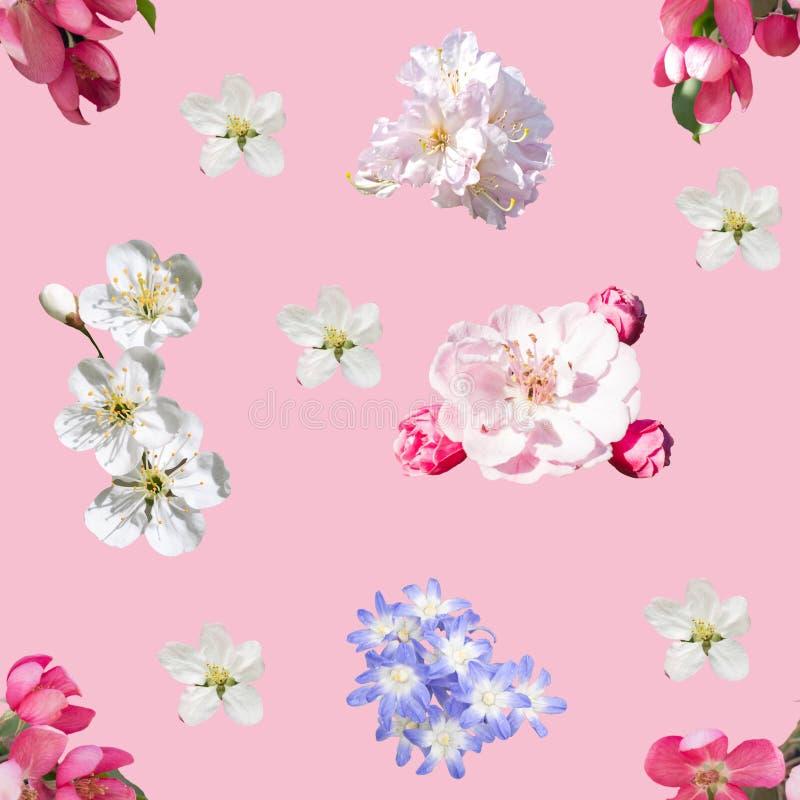 blommor mönsan den seamless fjädern vektor illustrationer