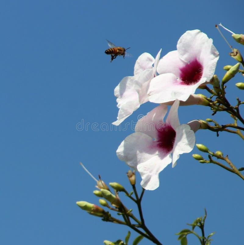 Blommor med ett bi royaltyfria bilder