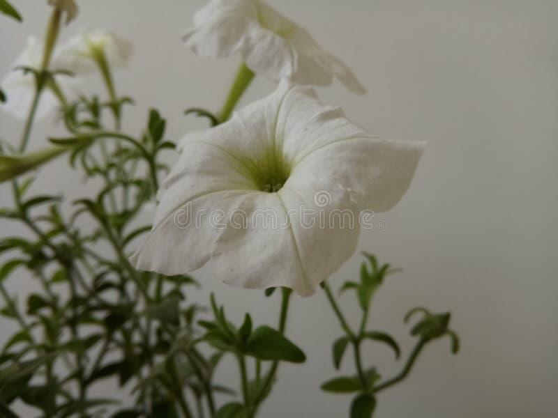 Blommor med 9k upplösning 65mpx royaltyfria foton