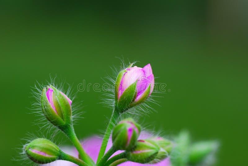 Blommor med slapp green royaltyfri bild