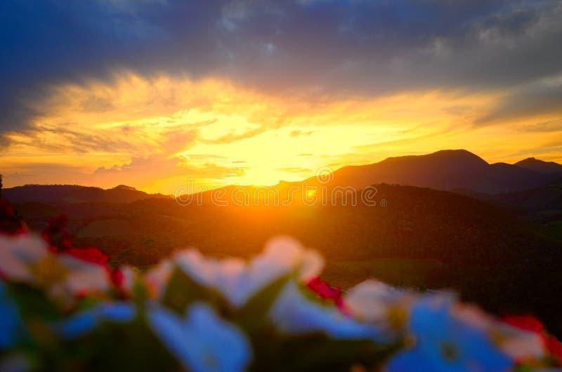 Blommor med solnedgång i bakgrunden arkivbilder