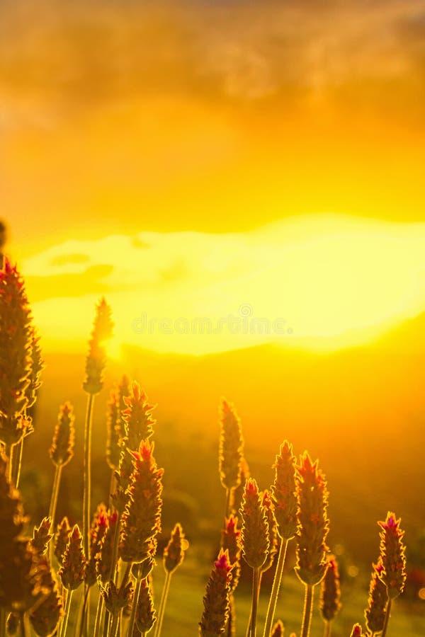 Blommor med solnedgång i bakgrunden arkivbild