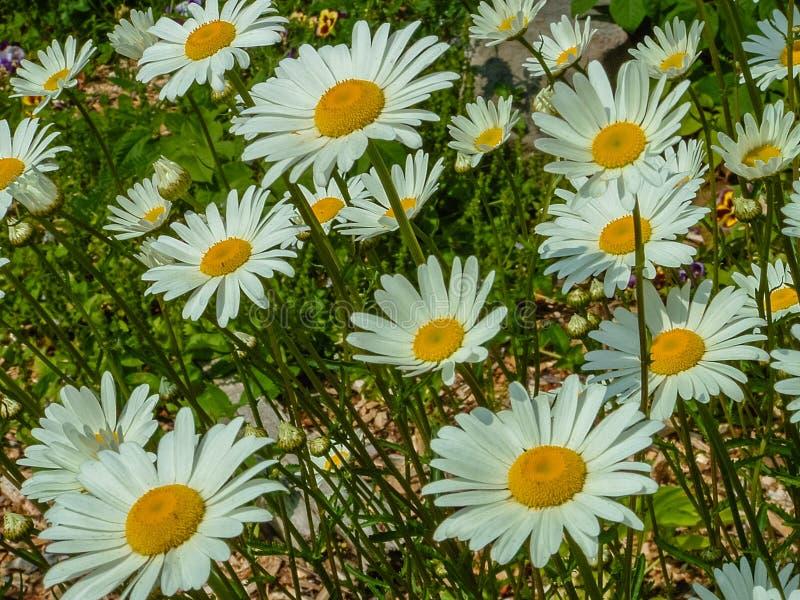 Blommor nära den Fundy nationalparken, OBS, Kanada royaltyfri foto