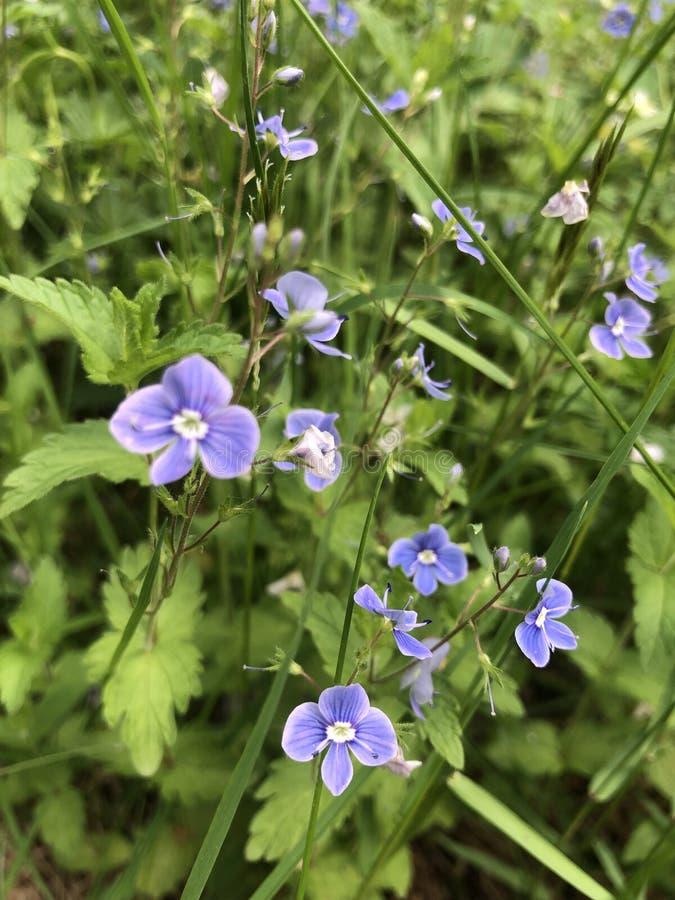 Blommor natur som är violett, lila, i fokus, blommor, natur, violett som är purpurfärgad, i fokus arkivfoto