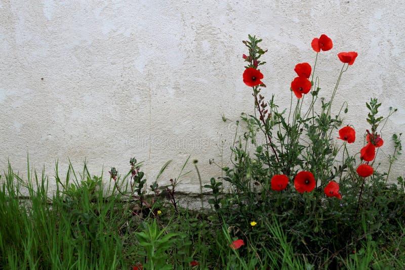 blommor near väggen royaltyfri bild