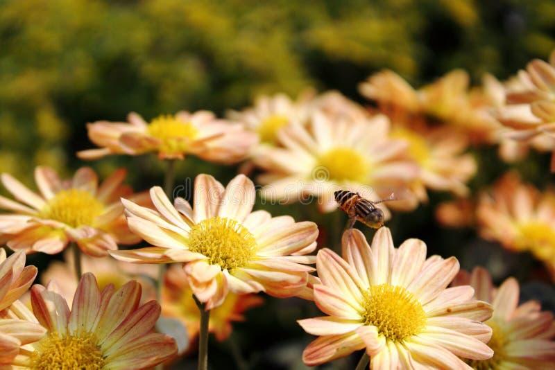 Blommor och bi royaltyfri bild