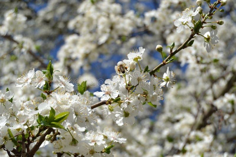 Blommor och bi royaltyfria bilder