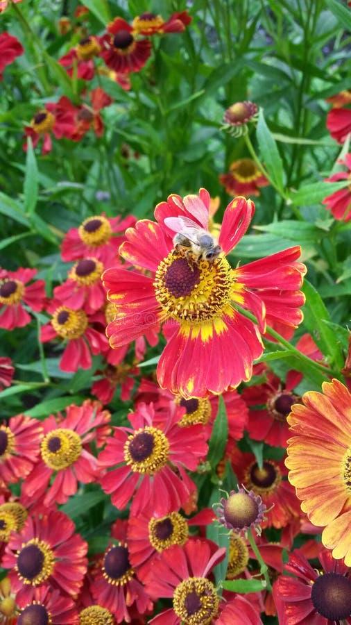 Blommor och bi royaltyfri fotografi