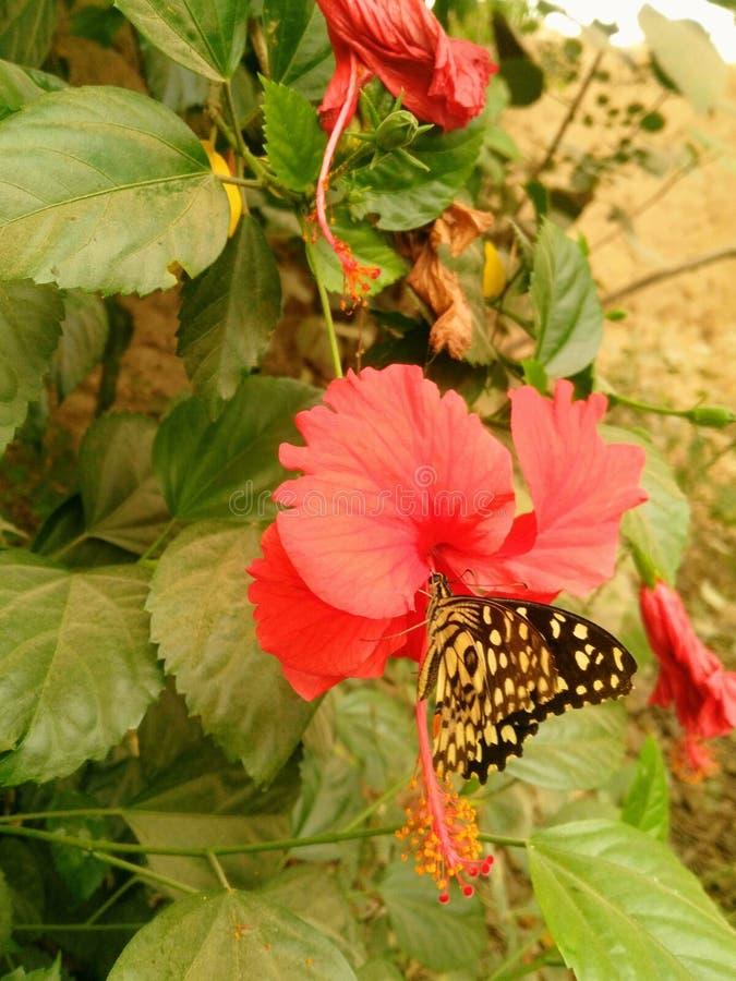 Blommor och butterfly& x27; s gör du väl mig hoppas dig har en underbar dag i dag royaltyfri foto