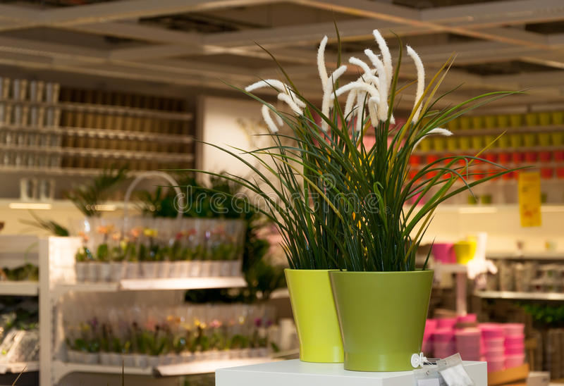 Blommor och den hem- dekoren shoppar royaltyfri foto