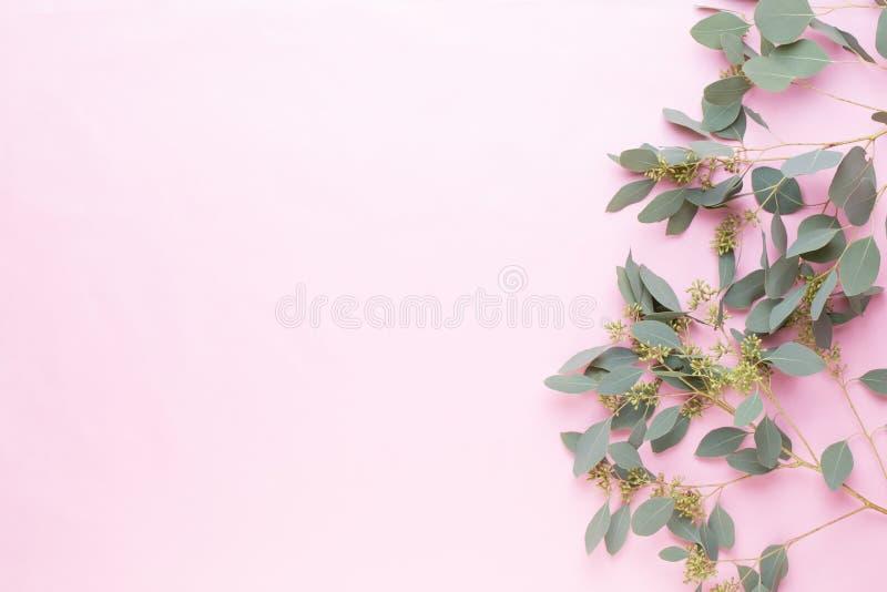 Blommor och eukalyptussammansättning Modell som göras av olika färgrika blommor på vit bakgrund Plant lekmanna- stiilliv arkivbilder