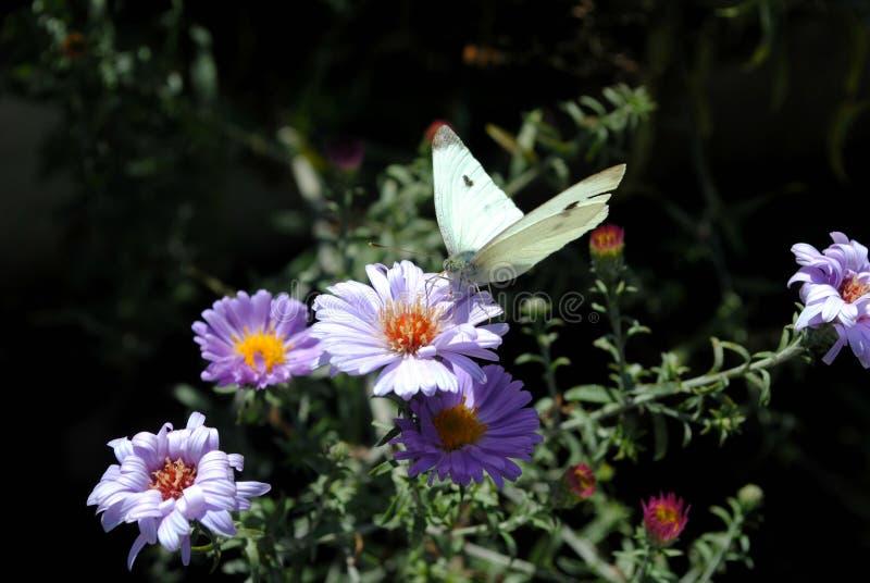 Blommor och förälskelse arkivfoto