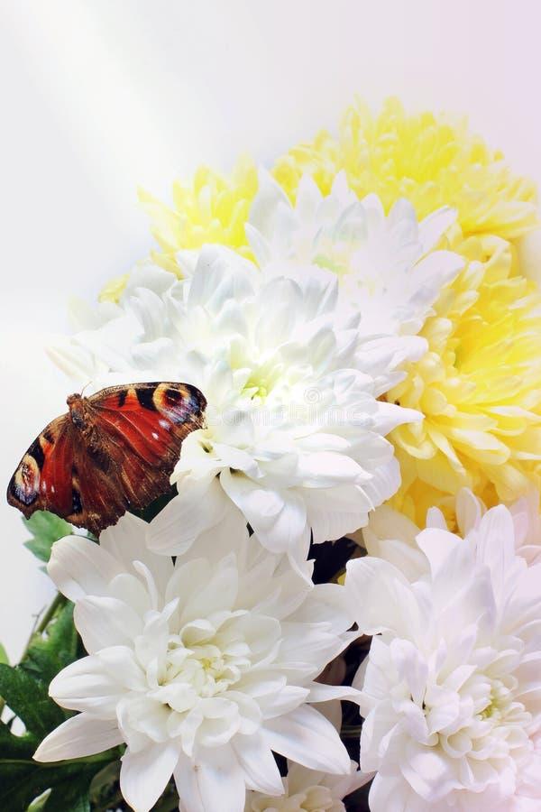 Blommor och fj?ril p? vit bakgrund arkivbild