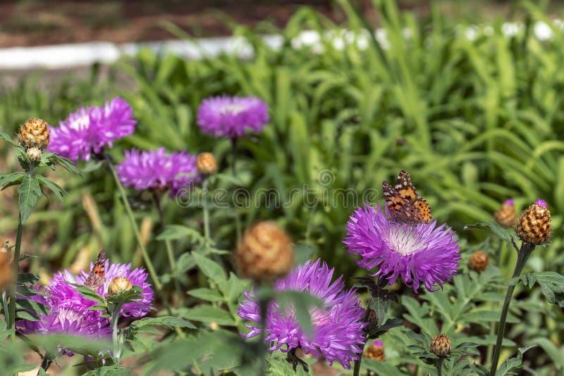 Blommor och fj?rilar arkivfoton
