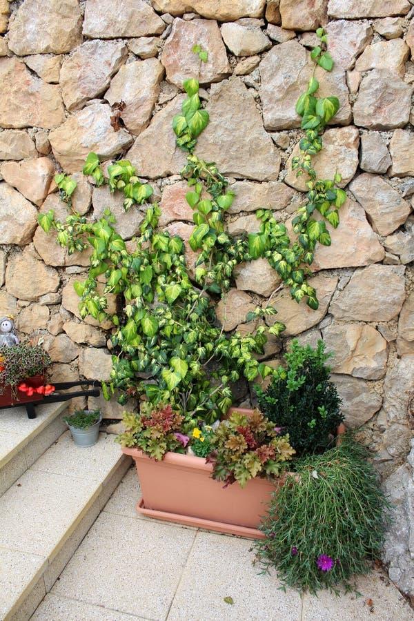 Blommor och grön rankaväxt på stenväggen arkivfoton