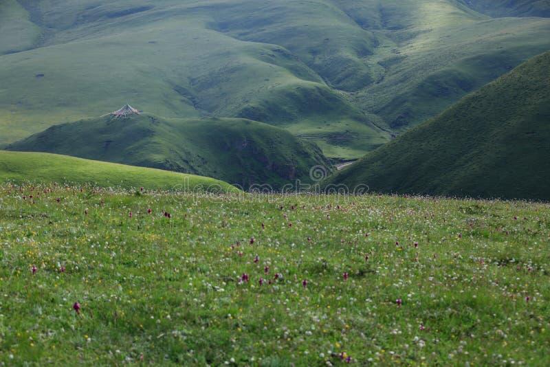 blommor och grönt gräs på sommarberg under landskap för blå himmel royaltyfria bilder