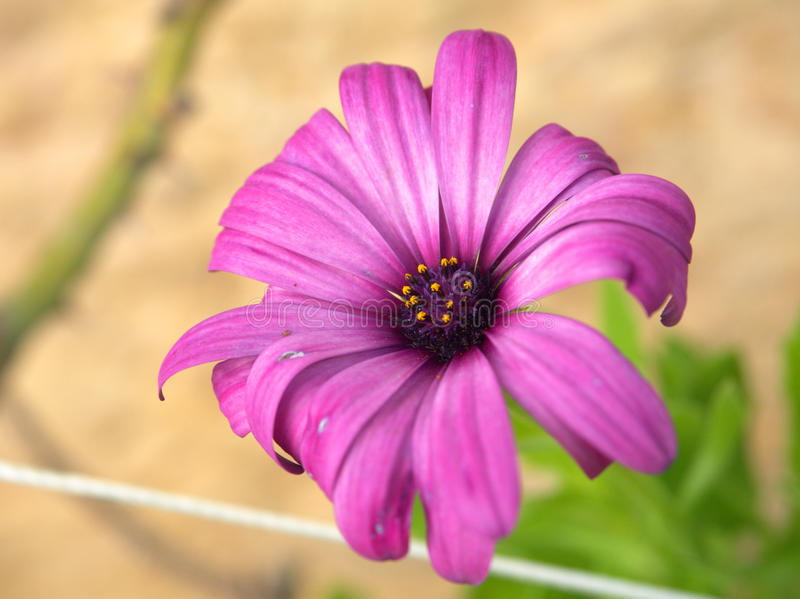 Blommor och lämnar royaltyfri fotografi