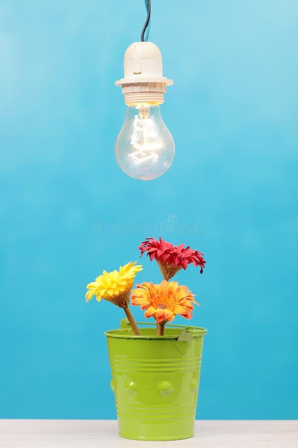 Blommor och ljus royaltyfri foto