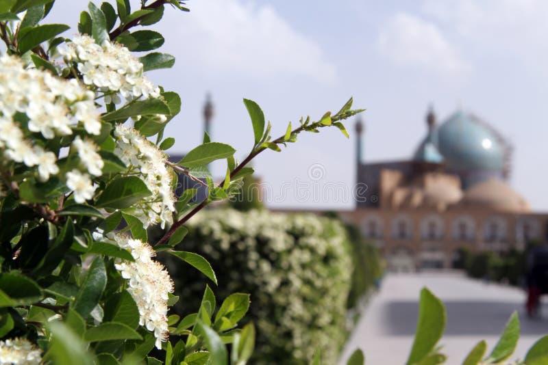 Blommor och moské arkivfoton
