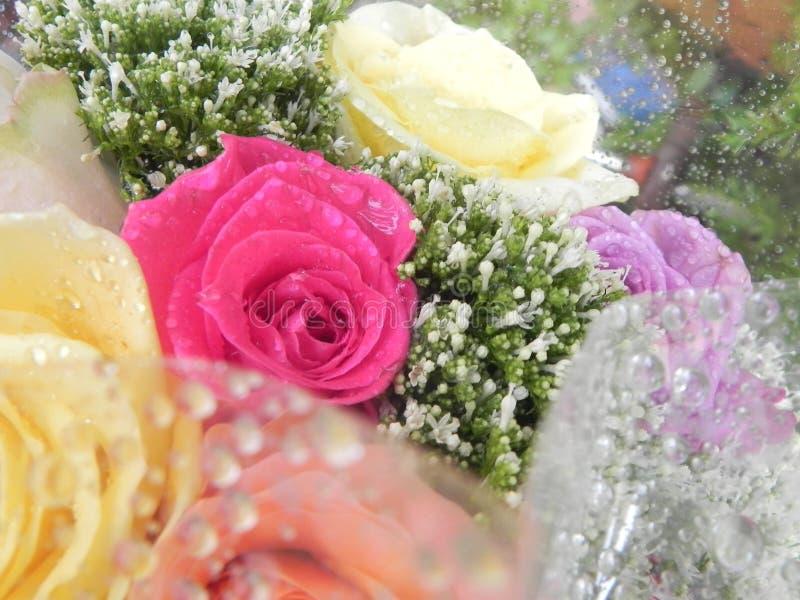 Blommor och regndroppar arkivbild