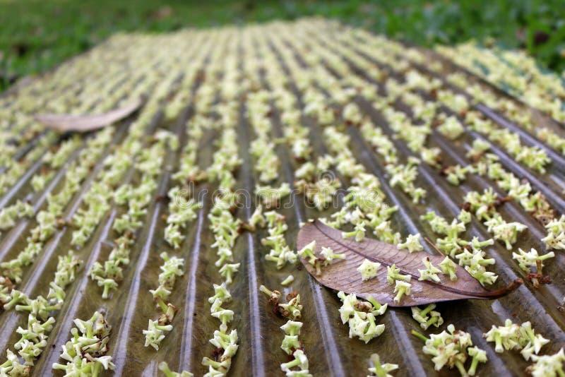 Blommor och sidorna faller på taket arkivfoto