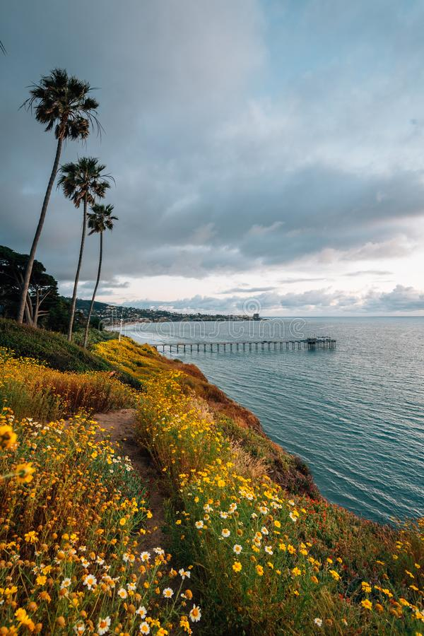 Blommor och sikt av den Scripps pir p? solnedg?ngen i La Jolla, San Diego, Kalifornien royaltyfria bilder
