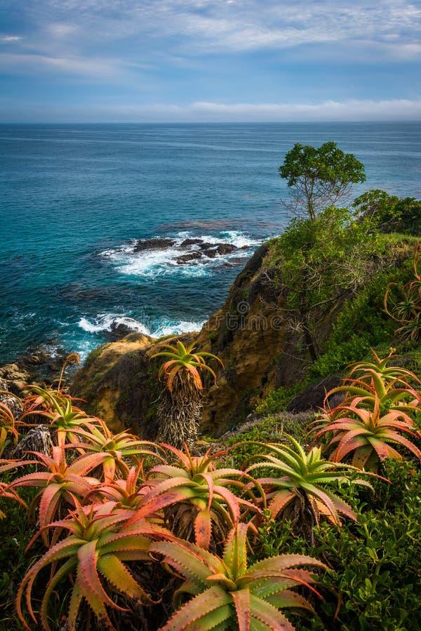 Blommor och sikt av Stilla havet, på Crescent Bay Point Par royaltyfri bild
