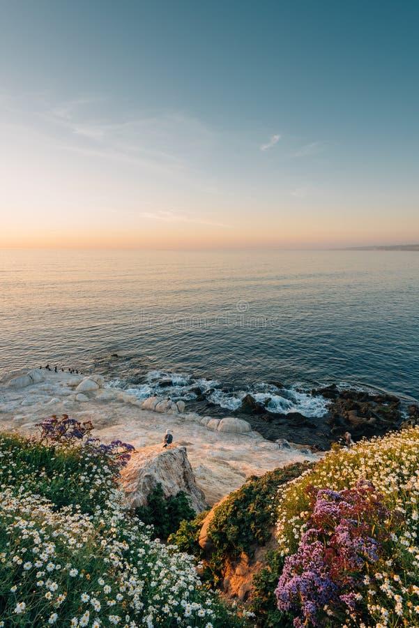 Blommor och stenig kust p? solnedg?ngen, i La Jolla, San Diego, Kalifornien royaltyfria foton