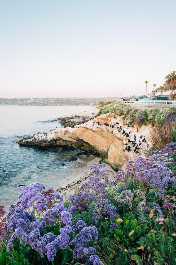 Blommor och stenig kust p? solnedg?ngen, i La Jolla, San Diego, Kalifornien royaltyfri fotografi