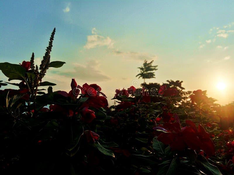 Blommor och Sun arkivfoto