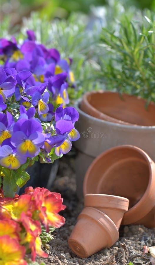 Blommor och terrakottakrukor på jorden arkivfoton