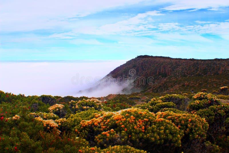 Blommor ovanför molnen fotografering för bildbyråer