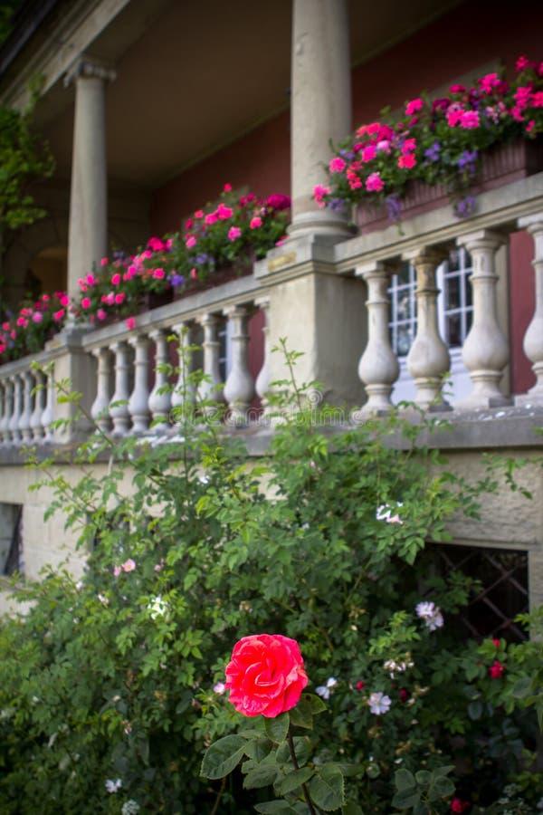 Blommor på balkonen royaltyfri bild